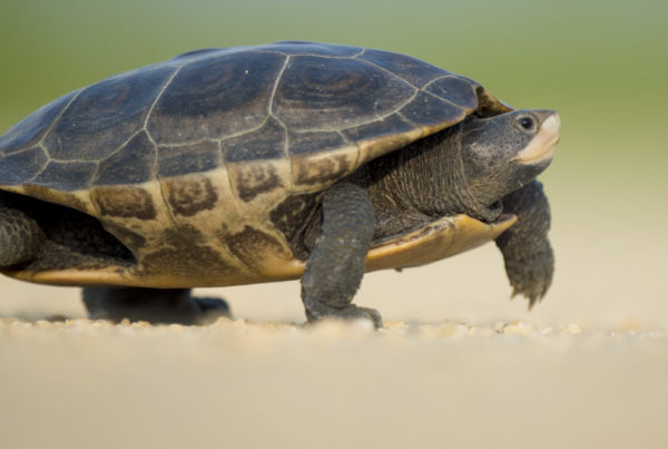 Turtle plodding through the sand