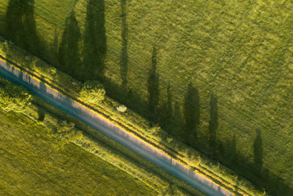 Trees along the side of the road cast long shadows across a grassy field