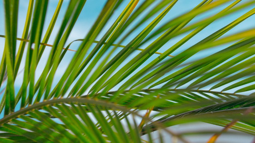 palm fronds against a blue background to symbolize Palm Sunday
