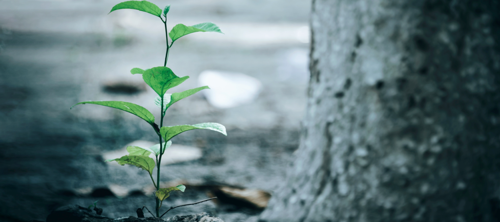 A green sapling sprouts next to a tree trunk, symbolizing an established church operating like a church plant.