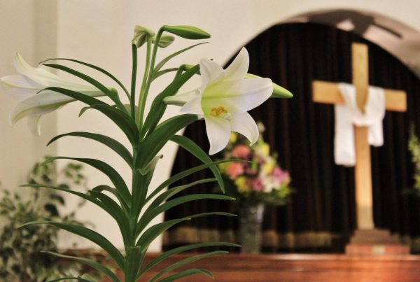 An Easter lily decorates the front of a church sanctuary for worship. A cross, draped in white cloth, is in the background.