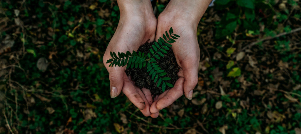 hands holding a seedling over a bed of soil