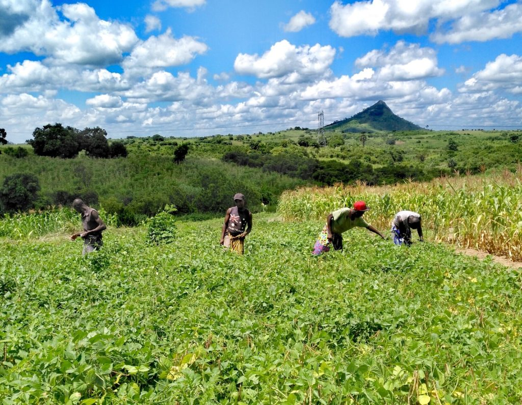 workers in a field in Mozambique Africa