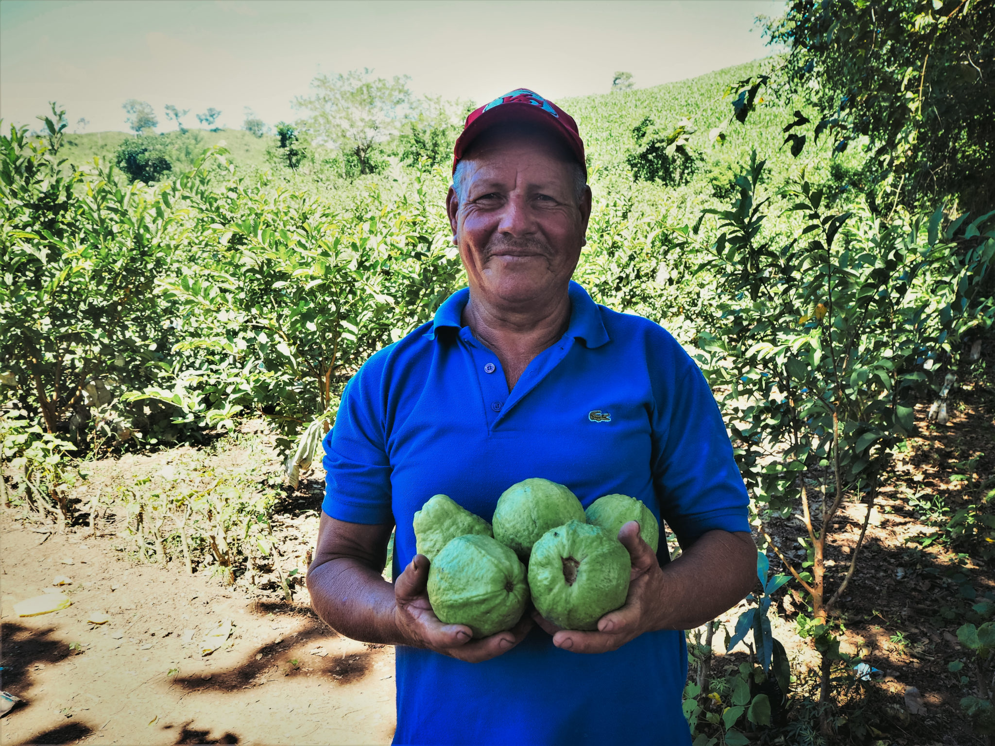A farmer holds five guavas, a fruit that is transforming his family and community.